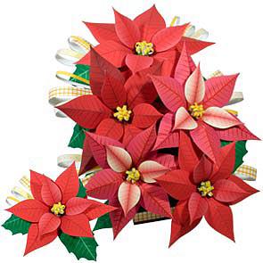 Bouquet di Stelle di Natale
